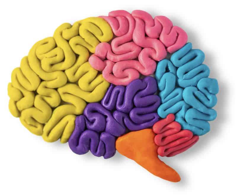 model of brain for diabetes brain fog